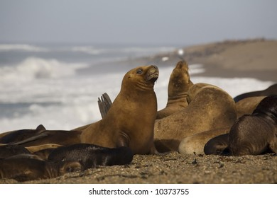 Many seal at the beach