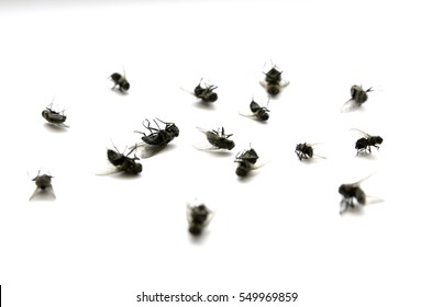 Many several dead flies on white paper with legs in the air