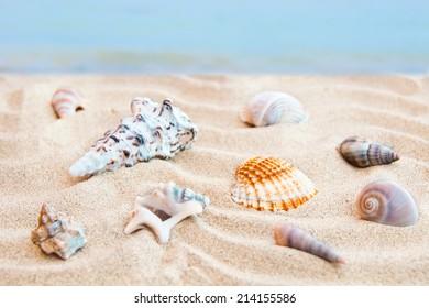 Many shells on sea beach sand