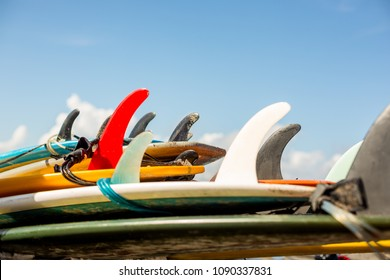 Many single fin surfing longboard with surf leash ready for rent. Have fun on big waves in open ocean. Modern family lifestyle, people water sport adventure camp and extreme swim on summer vacation.