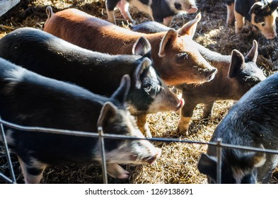 shed on farm Images, Stock Photos & Vectors | Shutterstock