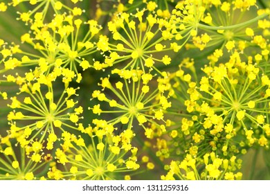many small yellow flowers on a dark green background