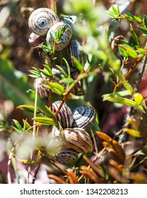 Many snails on the plant in the spring.