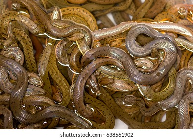 many snakes on each other tangled, half in the water, for sale