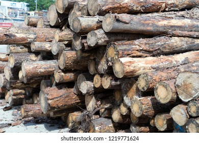 many stacked wood trunks