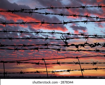 many strands of barbed wire against vivid sunset sky