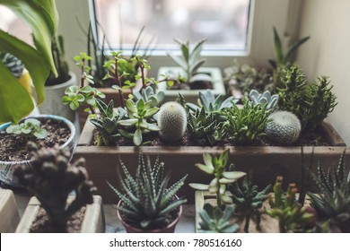 many succulents and houseplants in wooden tubs on the windowsill
