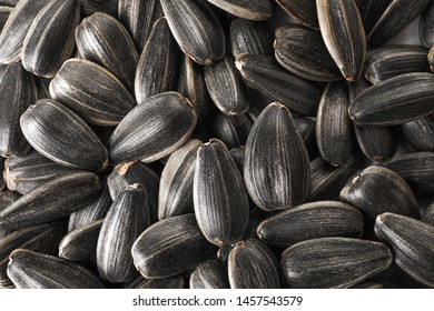 Many sunflower seeds as background