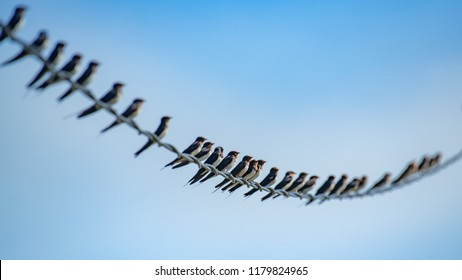 many swallows on the line with blue sky