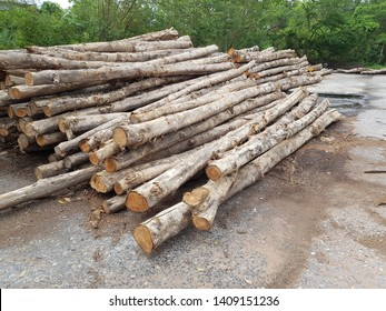 Many teak wood piles are outdoor, waiting to be processed, made furniture.