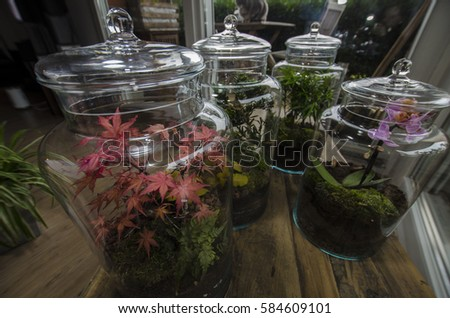 Many Terrarium Glass Jar Plant Beautiful Stock Photo Edit Now