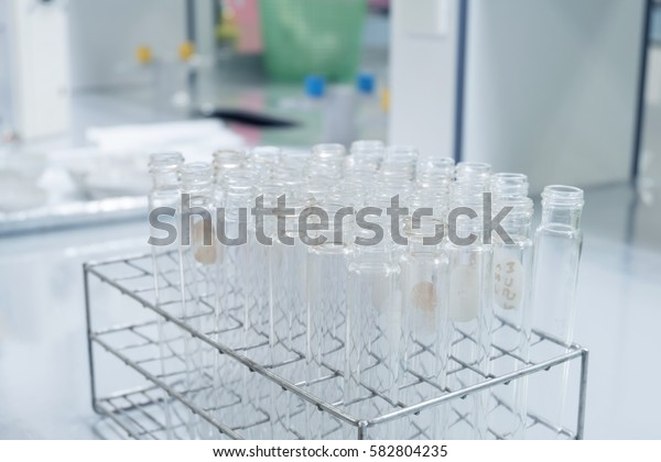 Many test tube with test tube rack, close up test tube in laboratory with clean background