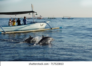 Many tourists looking for dolphins at Lovina beach , popular activities by spider boat trips to see dolphins.