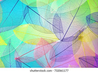 Many transparent silhouettes of skeleton leaves on multi-colored blue violet lilac and pink background. Floral pattern of beautiful leaves in nature macro.