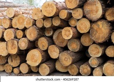 many tree trunks on a pile / tree trunks