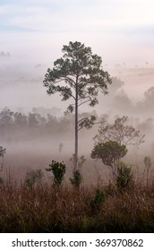 Many trees in the morning mist