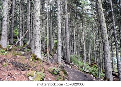 many trees mountain nature life
