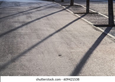 Many trees on a urban park floor with long sunset diagonal shadows