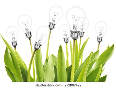 Many tulips with lamp bulms on white background