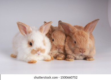 Many variety of baby adorable rabbit on white background. Young cute bunny in many action and color. Lovely pet with fluffy hair. Three litle young baby rabbit brown and dark gray as same family.