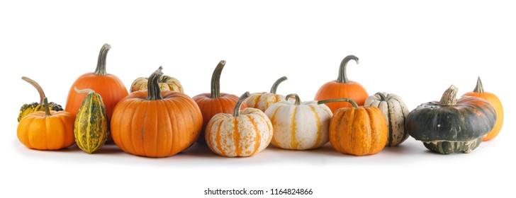 Many various pumpkins isolated on white background, Halloween or Thanksgiving day concept