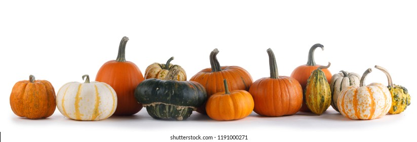 Many various pumpkins isolated on white background , Halloween or Thanksgiving day concept
