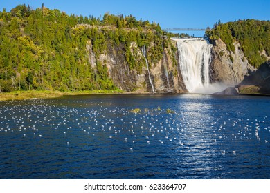Many water birds resting in water. The concept of active and cultural tourism. The vast blue lake and powerful waterfall Montmorency in Montmorency Falls Park, in vicinities Quebec
