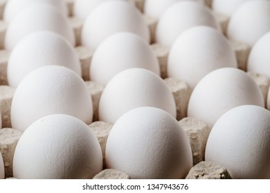 Many white chicken eggs food in tray box