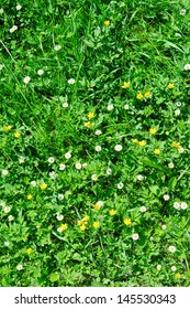 Many white daisies in top view of meadow, several Bird's-eye