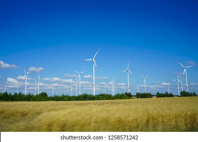 Many wind turbines are scattered in wheat field where wheat just begins to sprout. white clouds are punctuating the blue sky.