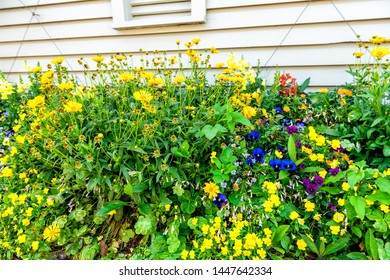 Many yellow orange flowers in flowerbed decorations on street in town by wooden house wall with pattern of vibrant color