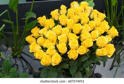 Many yellow roses.