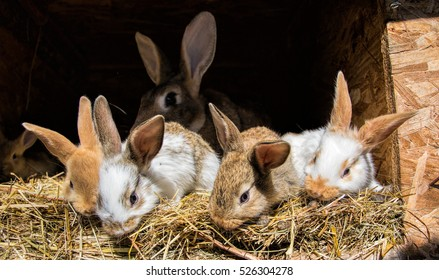 Many young sweet bunnies in a shed. A group of small colorful rabbits family feed on barn yard. Easter symbol