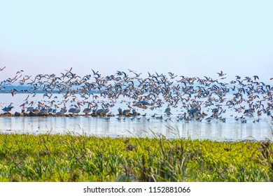 Manyas Bird Paradise National Park - Balikesir , Turkey