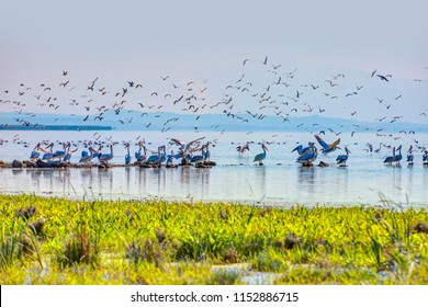 Manyas Bird Paradise National Park - Balikesir , Turkey