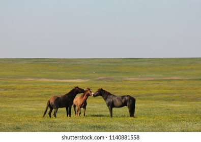MANYCH-GUDILO LAKE, ROSTOV OBLAST / RUSSIA - APRIL 24 2015: Rostov Nature Reserve protects a variety of southern European steppe wetlands and the largest herd of wild horses in Europe the Don Mustangs