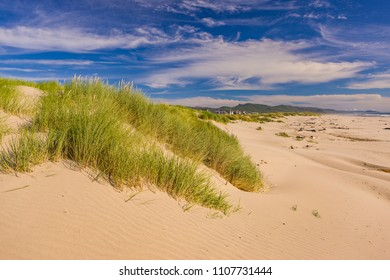 MANZANITA, OREGON, USA - JULY 18, 2009: Sand dunes, grasses, and beach on Oregon coast.