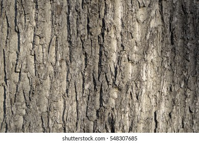 Maple bark texture photo brown for background use
