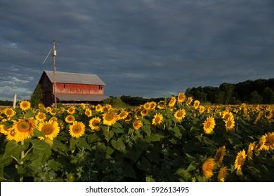 Maple Bay Farms