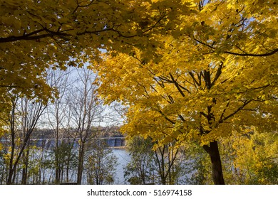 Maple forest in  in spectacular October light