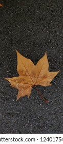 Maple leaf against dark asphalt.