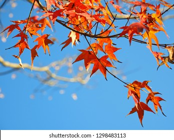 Maple leaf in autumn blue sky