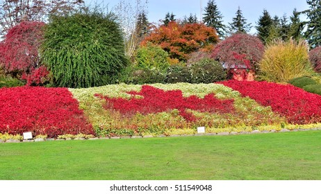 Maple leaf flower garden