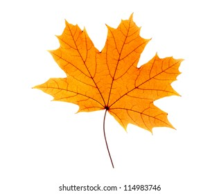 Maple leaf isolated on white