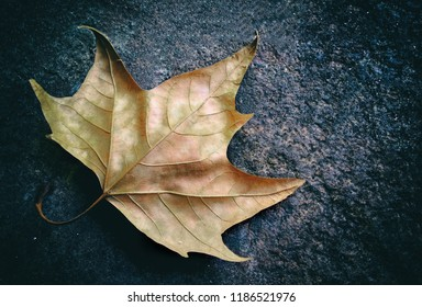 Maple leaf on asphalt.
