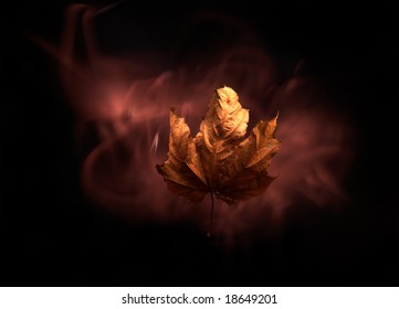 maple leaf on the black background   with light wind