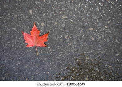 Maple leaf on ground with room and space for content.
