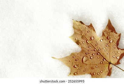 A maple leaf on snow during Fall/Autumn