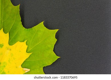 maple leaf on textured background / bright autumn maple leaf end of summer