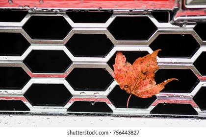 Maple leaf stuck to front of truck grate